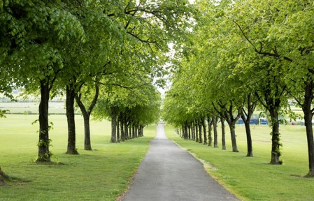 Tree lined path in Cowan Park